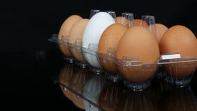 Grote bruine en één witte kippeneieren in een transparant plastic dienblad op witte achtergrond stock footage