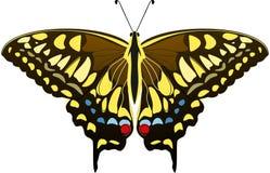 Grote bruine vlinder met blauwe, gele en rode vlekken Mahaonvlinder Papilio machaon Vector illustratie royalty-vrije illustratie