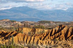 Grote cactussen in rode woestijn, tatacoawoestijn, Colombia, Latijnse amer Royalty-vrije Stock Foto's