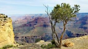 Grote Canion Arizona Stock Fotografie