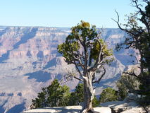 Grote Canion - Arizona - Mei 2013 Royalty-vrije Stock Afbeelding