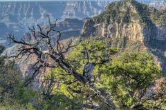Grote Canion, de Rand van het Noorden Stock Fotografie