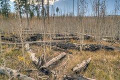 Grote Canion, de Rand van het Noorden Royalty-vrije Stock Foto