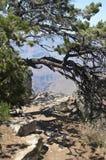 Grote Canion van de Rivier van Colorado E Geologische vormingen stock foto's