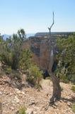 Grote Canion van de Rivier van Colorado Hermistrust Route Geologische vormingen royalty-vrije stock foto's
