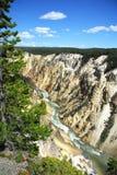 Grote Canion Yellowstone Royalty-vrije Stock Afbeeldingen