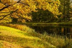 Grote cascadevijver in het park van Catherine in de de herfstochtend Stock Fotografie