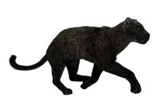 Grote Cat Black Panther Royalty-vrije Stock Afbeelding