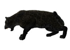 Grote Cat Black Panther Stock Afbeelding