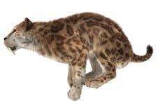 Grote Cat Smilodon Royalty-vrije Stock Fotografie