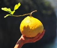 Grote citroen in een hand Stock Afbeelding
