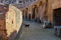 Grote Colosseum, Rome, Italië stock foto