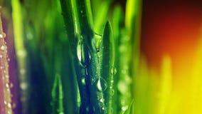 Grote dalingen van dauw op groen gras Kleurrijke achtergrond Rijpe zaden van granaatappel Stock Afbeeldingen
