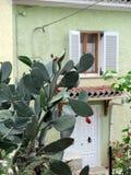 Grote Decoratieve Stekelige Pereninstallatie buiten Pale Green House, Griekenland Royalty-vrije Stock Fotografie