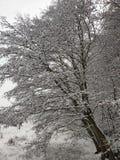 Grote die boom in sneeuw wordt behandeld royalty-vrije stock foto's
