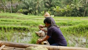 Grote die rotsen in heldergroene mos en lianas worden behandeld stock video
