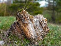 Grote die steen met gras in het bos wordt omringd stock foto