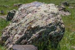 Grote die steen op een gebied met mos wordt behandeld stock afbeeldingen
