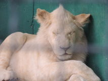 Grote dieren Stock Foto