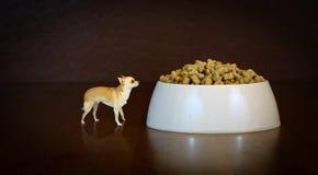 Grote droom! Het Perspectief van de kleine Hond! stock illustratie