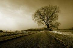 Grote eenzame boom stock afbeeldingen