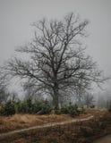 Grote eenzame boom in de herfstochtend foggy stock foto