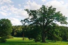 Grote eik in het park Royalty-vrije Stock Afbeelding
