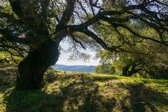 Grote eiken boom die schaduw, het park van Sugarloaf Ridge State, Sonoma-Provincie, Californië verstrekken royalty-vrije stock afbeeldingen