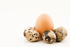 Grote en kleine eieren Royalty-vrije Stock Foto