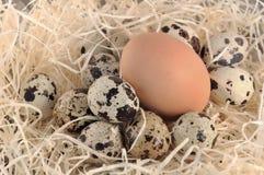 Grote en kleine eieren Royalty-vrije Stock Foto's