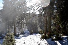 Grote Fatra-bergen - mist tussen bomen in de vroege winter Royalty-vrije Stock Afbeelding