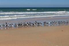 Grote Flkock van Zeemeeuwen die zich op het Strand bevinden Royalty-vrije Stock Fotografie