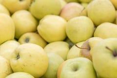 Grote gele appelen in de opslag Achtergrond van gele appelen Stock Afbeeldingen