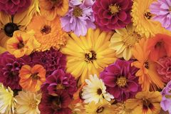 Grote gele calendulabloem onder gemengde bloei royalty-vrije stock foto