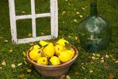 Grote gele kweeperen in een kleikom royalty-vrije stock foto
