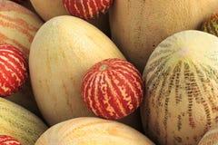 Grote gele meloenen en kleine rode meloenen royalty-vrije stock foto's