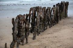 Grote golfbreker, 3000 boomstammen om de stad van de getijden, het strand ‰ van Strandde te verdedigen l 'Ã ventail in Saint Malo stock afbeeldingen