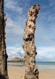 Grote golfbreker, 3000 boomstammen om de stad van de getijden, het strand ‰ van Strandde te verdedigen l 'Ã ventail in Saint Malo stock afbeelding