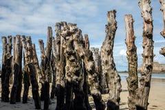 Grote golfbreker, 3000 boomstammen om de stad van de getijden, het strand ‰ van Strandde te verdedigen l 'Ã ventail in Saint stock afbeeldingen