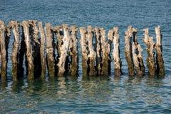 Grote golfbreker, 3000 boomstammen om de stad van de getijden, het strand ‰ van Strandde te verdedigen l 'Ã ventail in Saint Malo stock fotografie