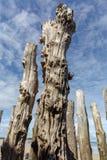 Grote golfbreker, 3000 boomstammen om de stad van de getijden, het strand ‰ van Strandde te verdedigen l 'Ã ventail in Saint Malo royalty-vrije stock foto