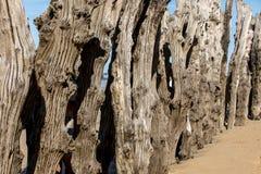 Grote golfbreker, 3000 boomstammen om de stad van de getijden, het strand ‰ van Strandde te verdedigen l 'Ã ventail in Saint Malo royalty-vrije stock fotografie