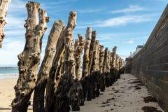 Grote golfbreker, 3000 boomstammen om de stad van de getijden, het strand van Strandde l 'Ã ‰ ventail in Saint Malo, Bretagne te  stock afbeelding