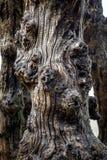 Grote golfbreker, 3000 boomstammen om de stad van de getijden, het strand van Strandde l 'Ã ‰ ventail in Saint Malo, Bretagne te  royalty-vrije stock foto