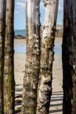 Grote golfbreker, 3000 boomstammen om de stad van de getijden, het strand van Strandde te verdedigen l 'Éventail in Saint Mal stock afbeeldingen