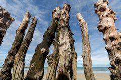 Grote golfbreker, 3000 boomstammen om de stad van de getijden, het strand van Strandde te verdedigen l 'ÃÆ'â⠂¬Â°ventail in Sa stock foto's