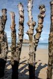 Grote golfbreker, 3000 boomstammen om de stad van de getijden, het strand van Strandde te verdedigen l Eventail in Saint Malo, royalty-vrije stock afbeeldingen