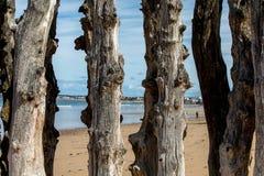 Grote golfbreker, 3000 boomstammen om de stad van de getijden, het strand van Strandde te verdedigen l Eventail in Saint Malo, stock fotografie
