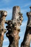 Grote golfbreker, 3000 boomstammen om de stad van de getijden, het strand ? van Strandde te verdedigen l ?? ventail in Saint Malo stock fotografie