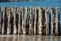Grote golfbreker, 3000 boomstammen om de stad van de getijden, het strand ? van Strandde te verdedigen l ?? ventail in Saint Malo stock afbeeldingen